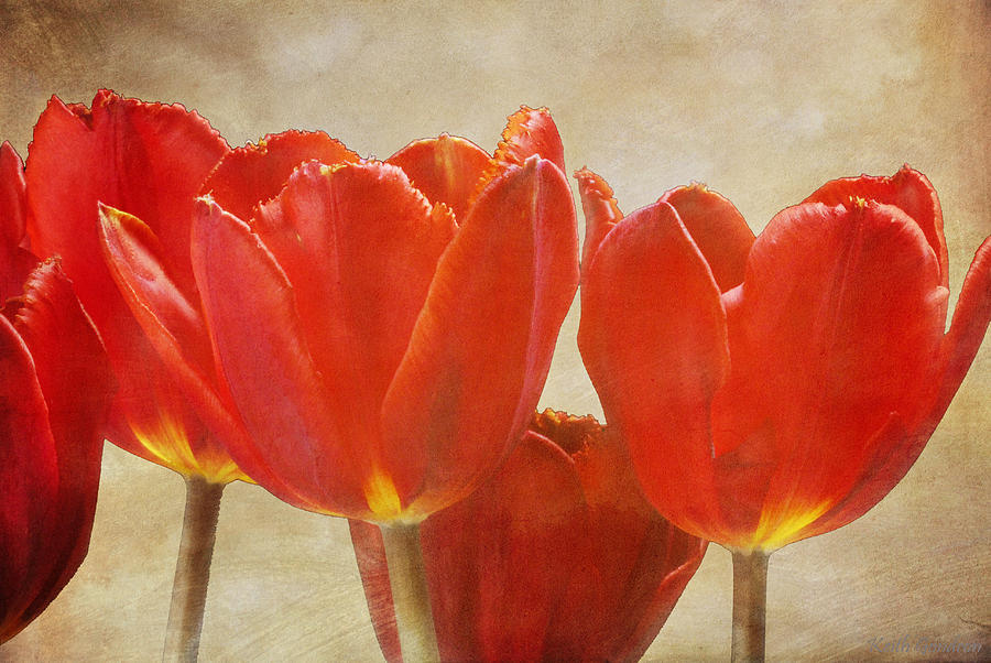 Fine Photograph - Red Tulips in Art by Keith Gondron