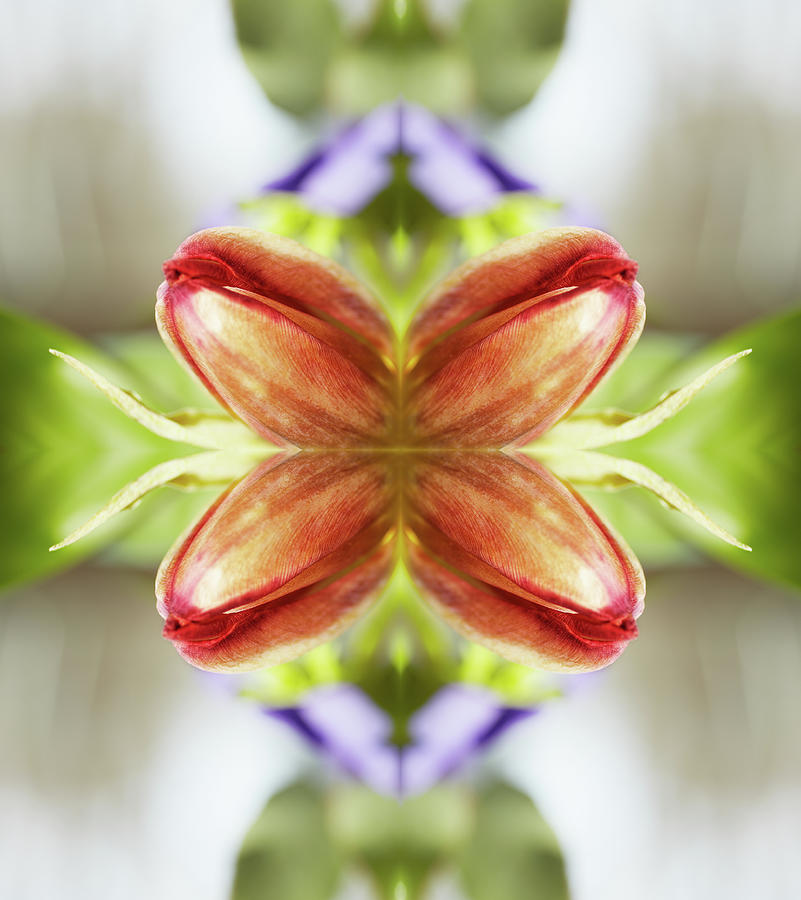 Red Tulips Photograph by Silvia Otte