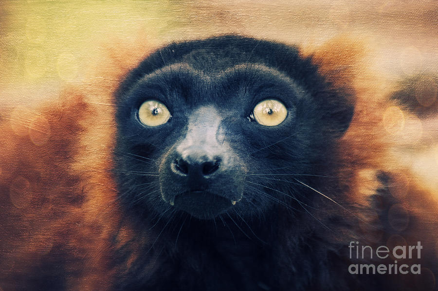 Lemur Photograph - Red Vari by Angela Doelling AD DESIGN Photo and PhotoArt