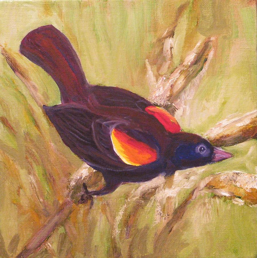 Black Bird Painting - Red Wing Black Bird by Cecelia Campbell