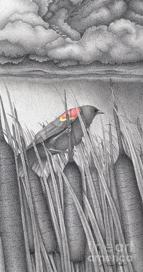 Red-winged Blackbird Drawing - Red-winged Blackbird by Wayne Hardee