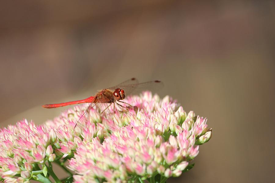 Nature Photograph - Red Wonder by Sue Chisholm