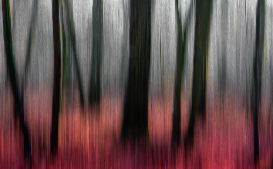 Blur Photograph - Red Wood by Gilbert Claes