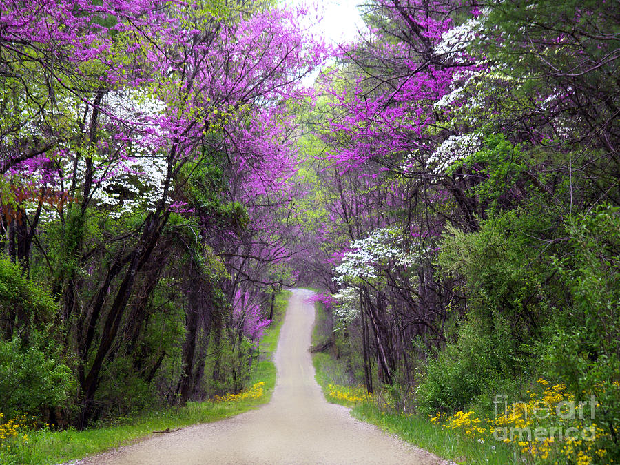 Redbuds In Bloom Annlynn Ward on Metal Wall Art Mountains Trees