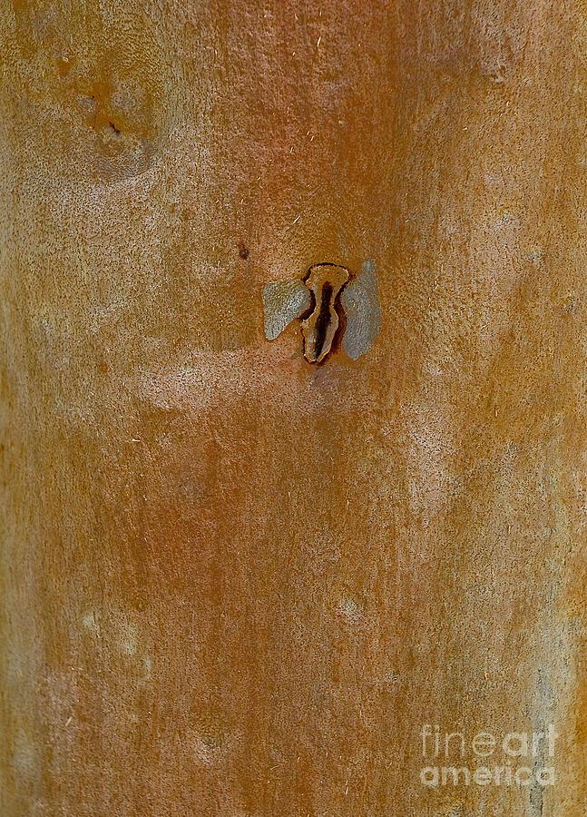 Bush Photograph - Redgum Tree by Steven Ralser