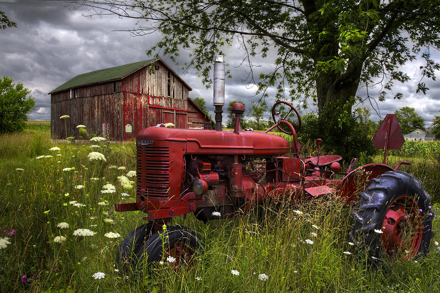 Appalachia Photograph - Reds In The Pasture by Debra and Dave Vanderlaan