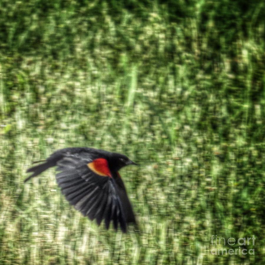 Redwing Blackbird Abstract Photograph
