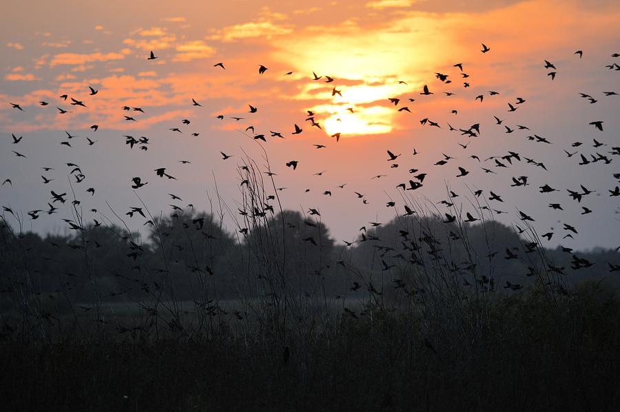 Redwing Photograph - Redwing Sunset by Bonfire Photography
