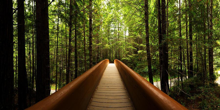 Redwood Photograph - Redwood Bridge by Chad Dutson