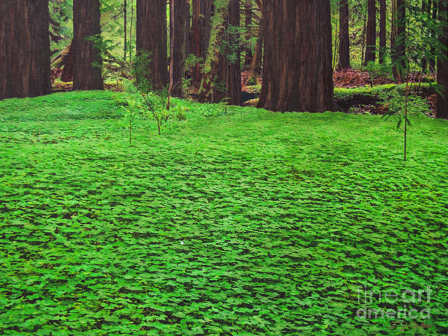 Redwood Carpet by L J Oakes