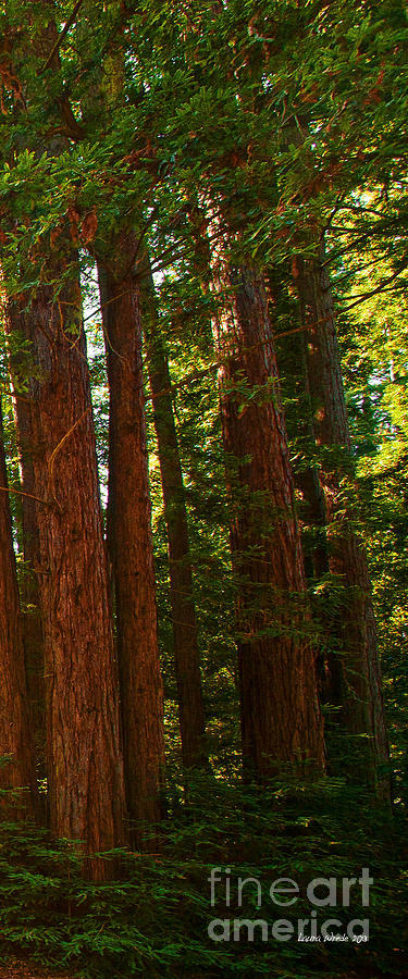 Redwoods Photograph - Redwood Wall Mural Panel Three by Artist and Photographer Laura Wrede