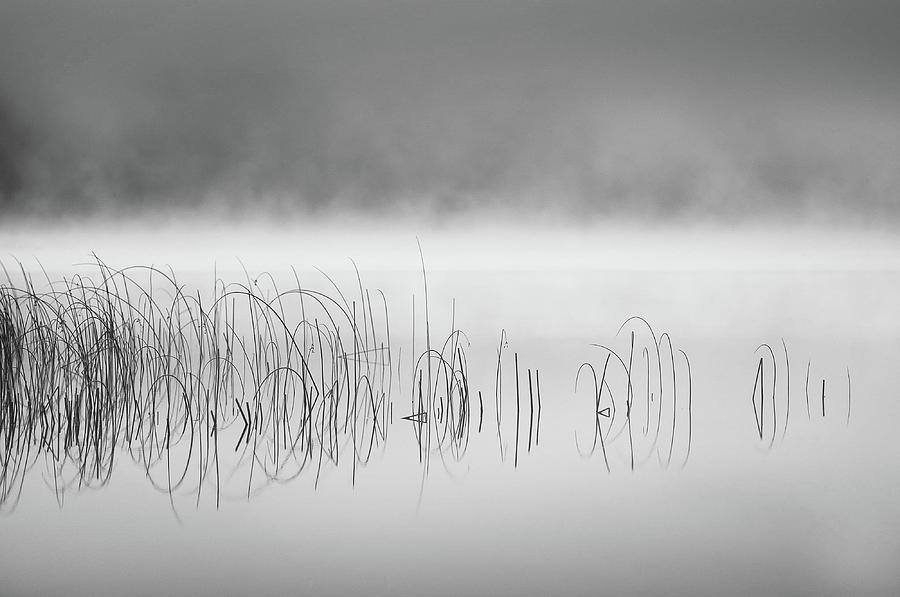 Reed Photograph - Reed In Fog by Benny Pettersson