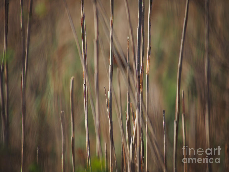Reeds 051213 by Gene  Marchand