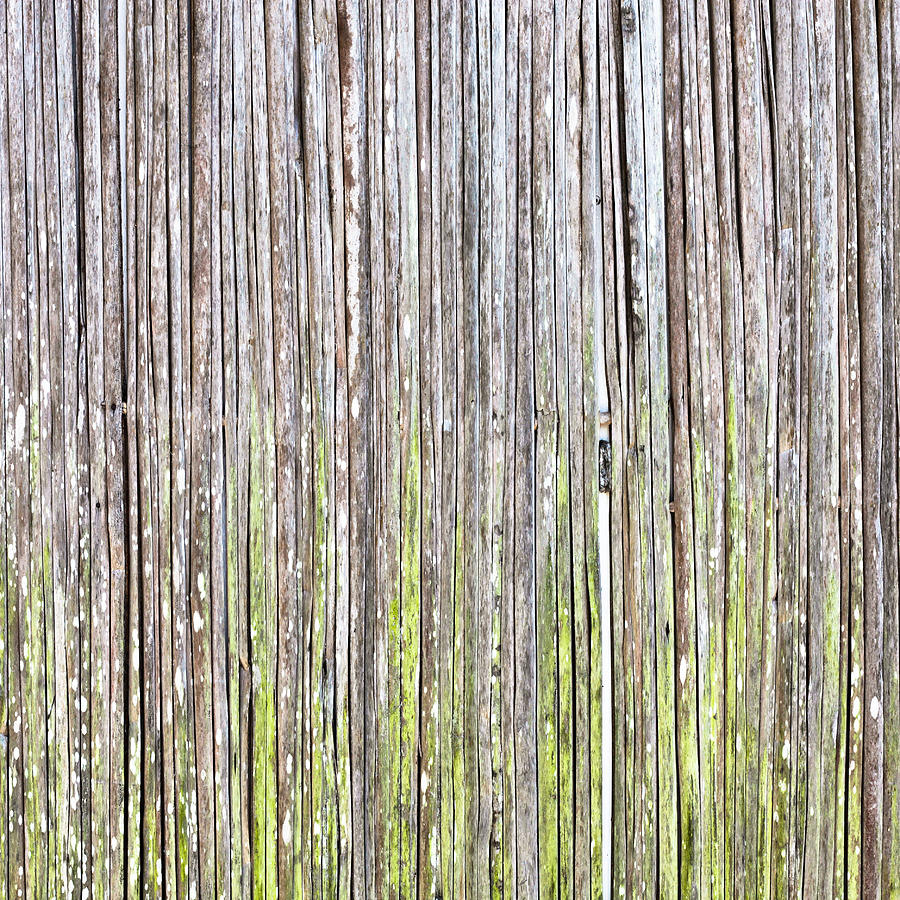 Abstract Photograph - Reeds Background by Tom Gowanlock