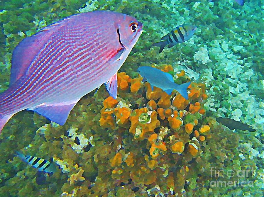 Fish Painting - Reef Life by John Malone
