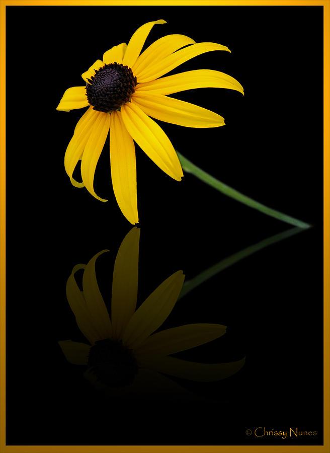 Flower Photograph - Reflect by Christine Nunes