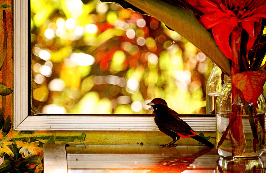Bird Photograph - Reflecting On Beauty by Peggy Collins