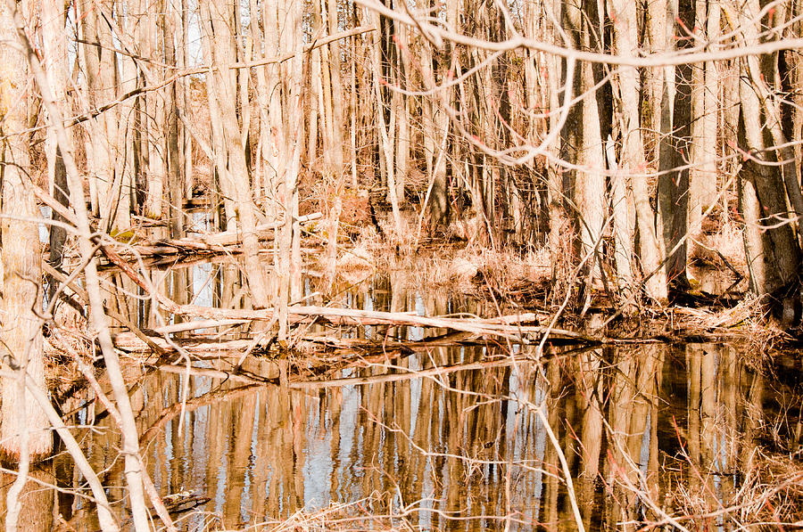 Trees Photograph - Reflection 2 by BandC  Photography