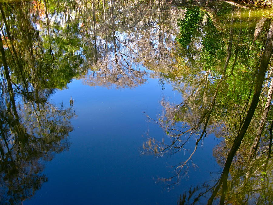 Reflection Photograph - Reflection by Denise Mazzocco