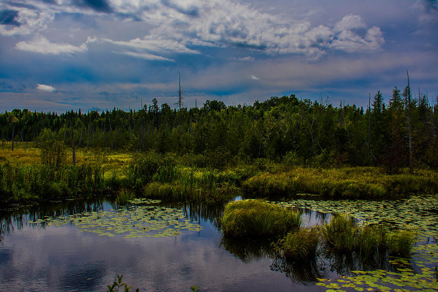 Skies Photograph - Reflection In The Swamp by Jason Brow