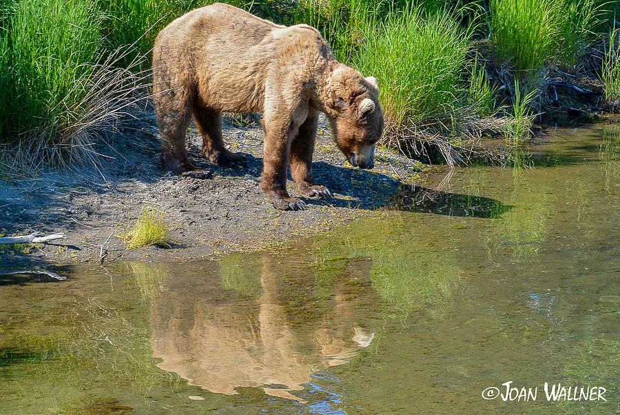 Alaska Photograph - Reflection by Joan Wallner