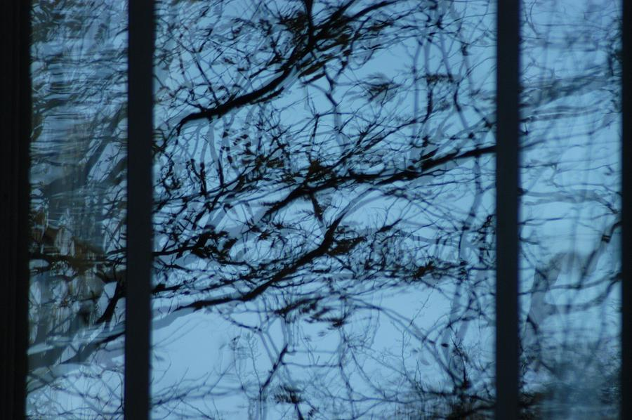 Branches Photograph - Reflection by Joseph Yarbrough