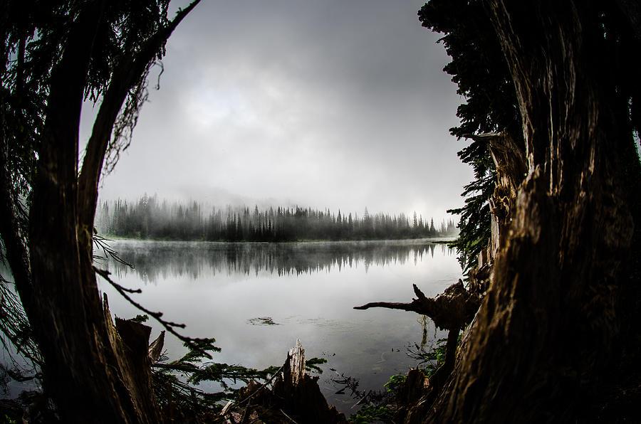 Fine Art America Photograph - Reflection Lake Through The Stump by Brian Xavier