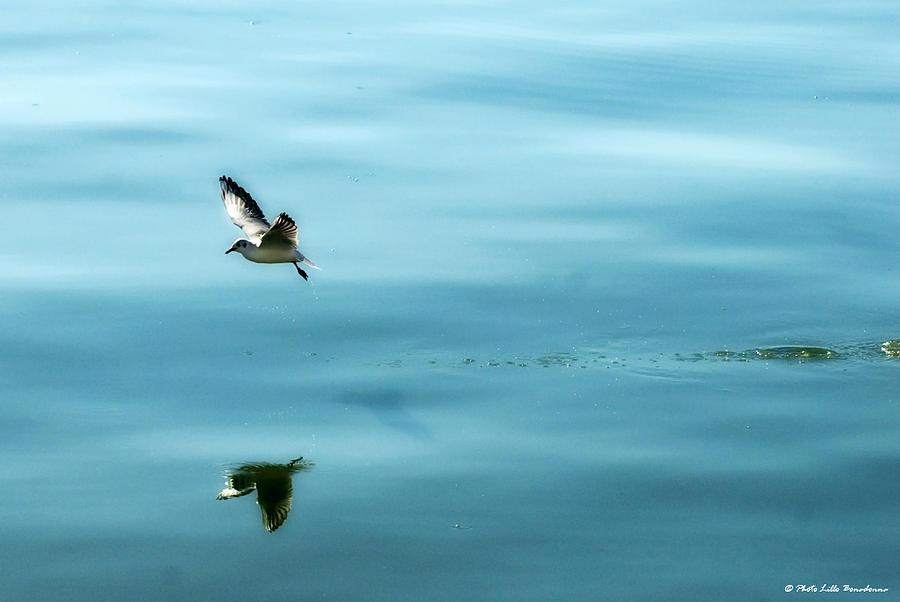 Landscape Photograph - Reflection... by Lillo Bonadonna