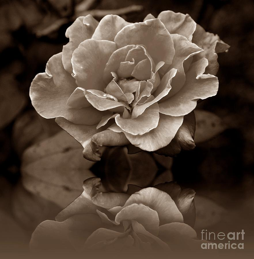 Rose Photograph - Reflection Of Fading Times by Scott Allison