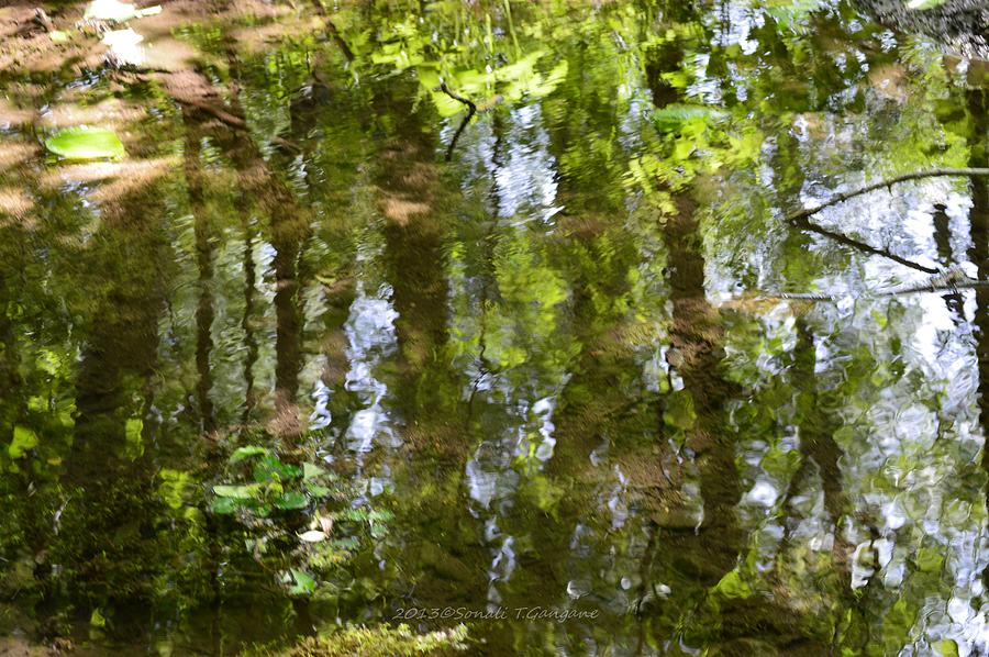 Nature Photography Photograph - Reflection Of Woods by Sonali Gangane