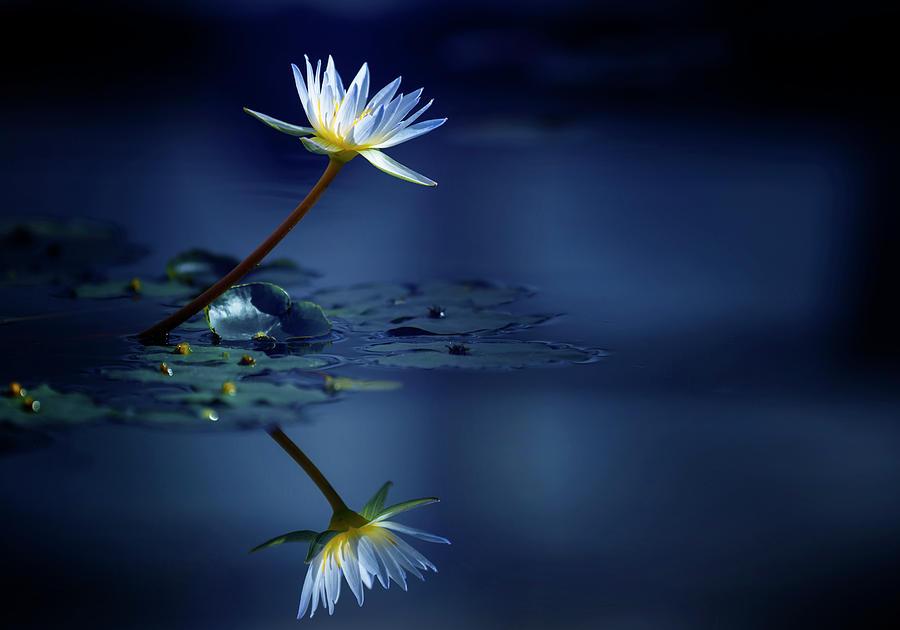 Reflection Photograph by Takashi Suzuki