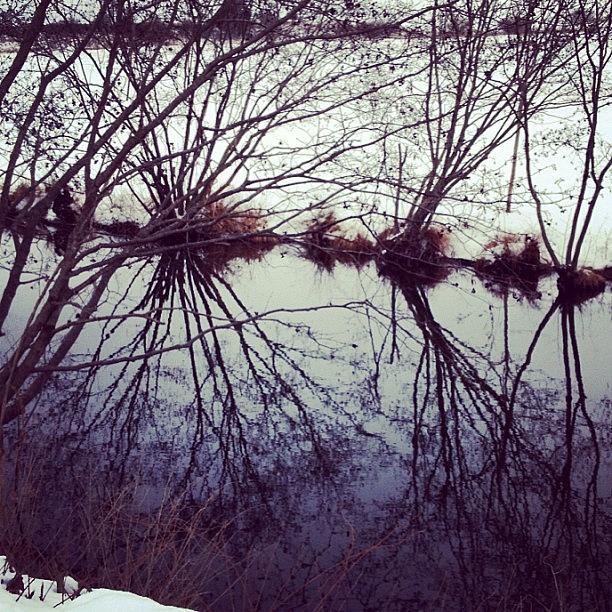 Water Photograph - #reflection #water #river #bush #pretty by Amber Campanaro
