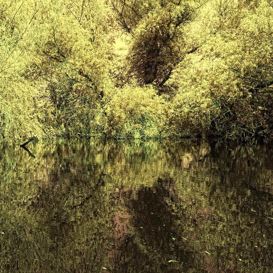 Reflections Photograph - Reflections 4 by Vessela Banzourkova