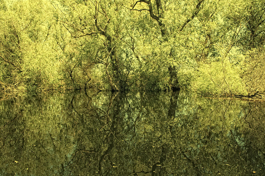 Reflections Photograph - Reflections 5 by Vessela Banzourkova