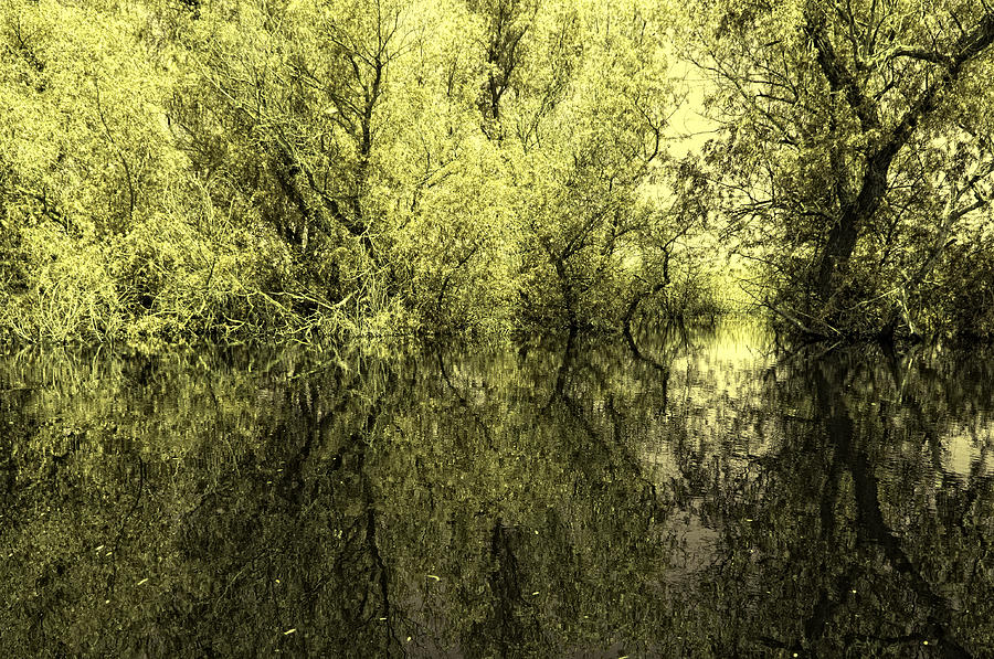 Reflections Photograph - Reflections 7 by Vessela Banzourkova