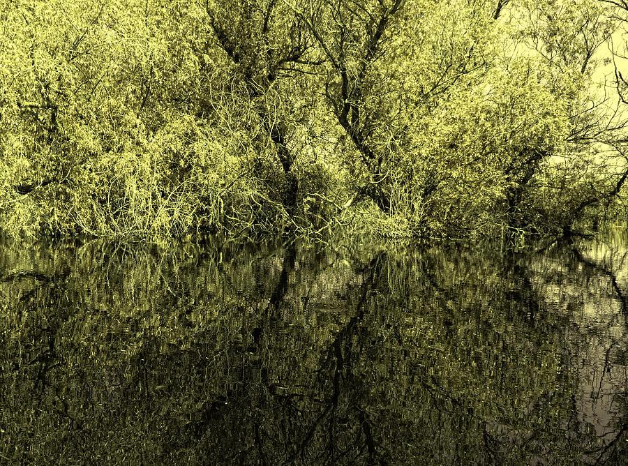 Reflections Photograph - Reflections 8 by Vessela Banzourkova