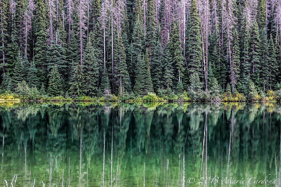 Reflections At Lightning Lake Photograph by Marie  Cardona