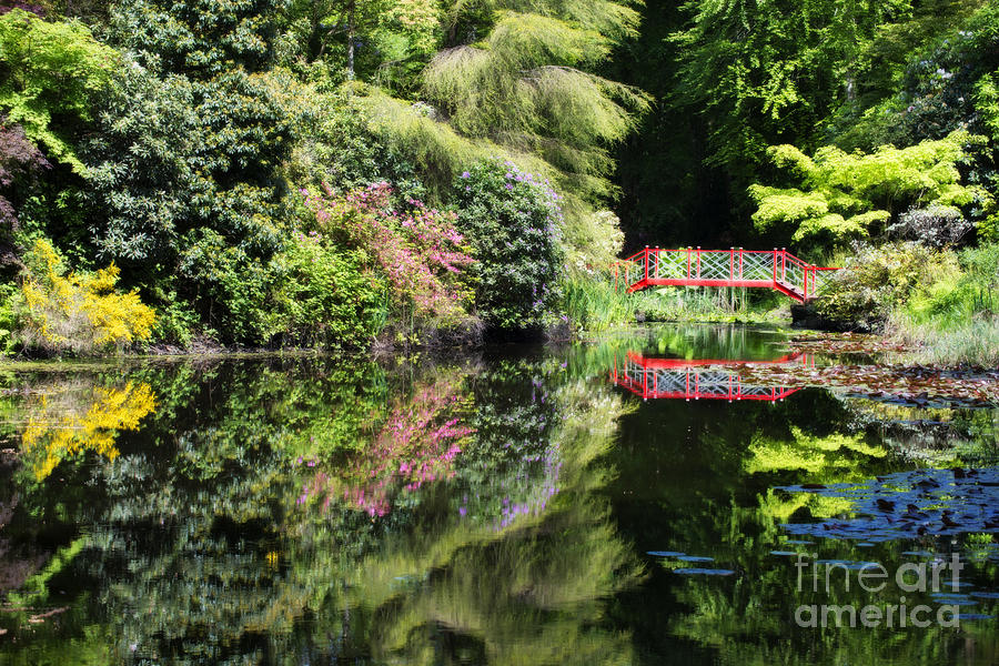 Water Photograph - Reflections by Amanda Elwell