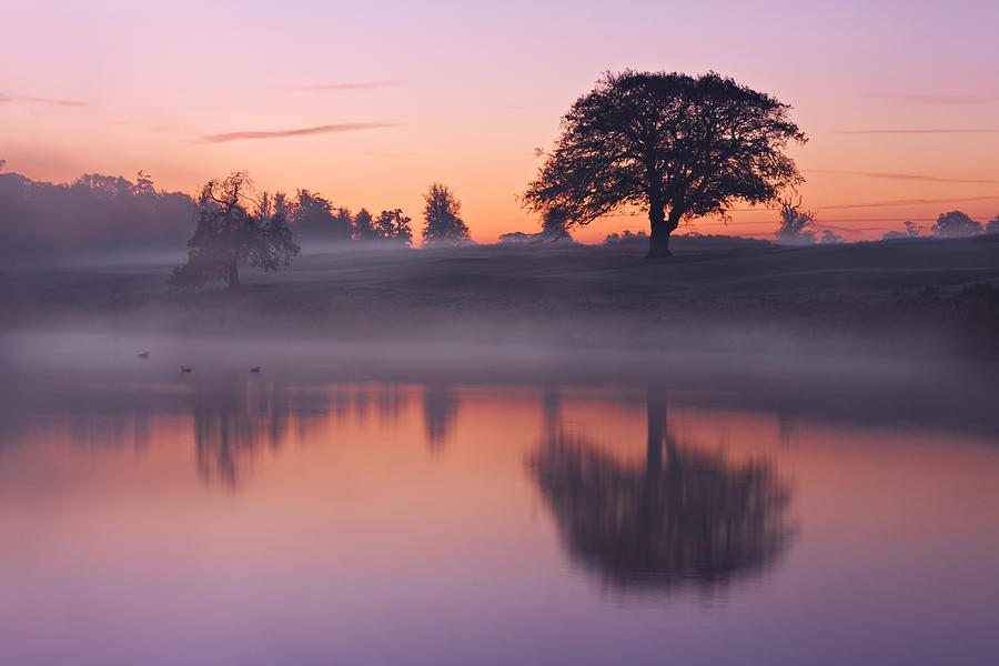 Reflections in a Lake at Dawn / Maynooth by Barry O Carroll