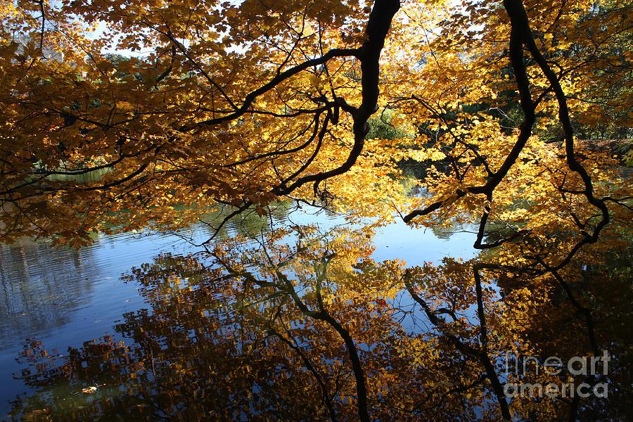 Reflections Photograph - Reflections by John Telfer