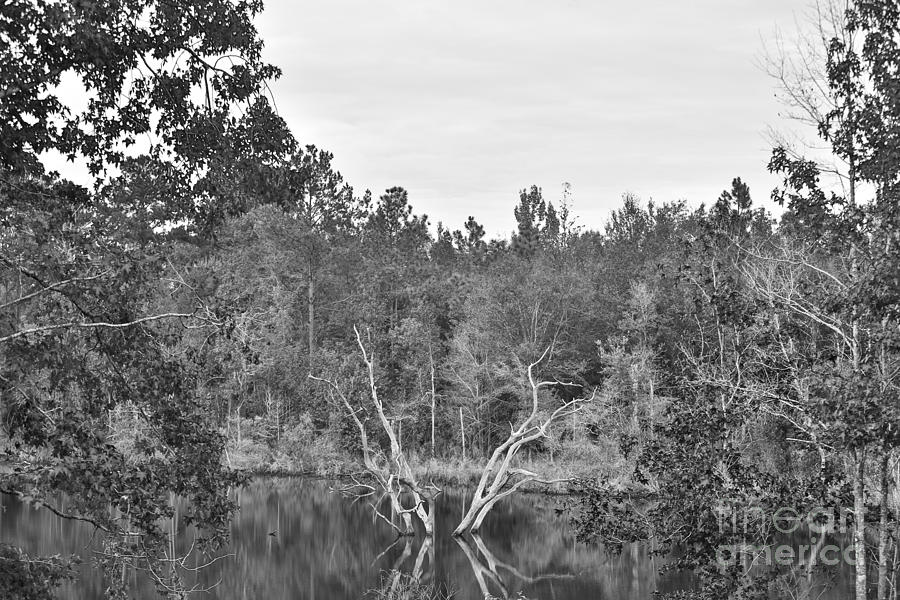 Landscape Photograph - Reflections by Mina Isaac