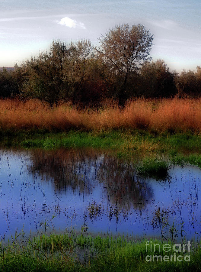 Landscape Photograph - Reflections by Molly McPherson