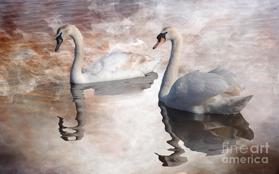 Swans Photograph - Reflections Of Love by Wobblymol Davis