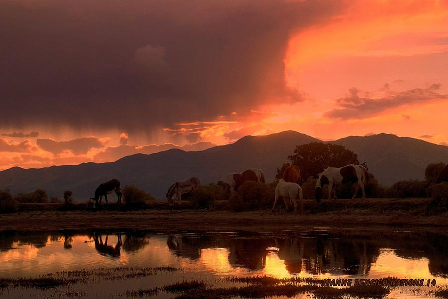 Burros Photograph - Reflections Of Nature  by Jeanne  Bencich-Nations