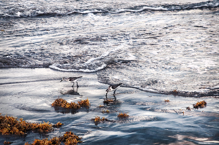 Satellite Beach Photograph - Reflections Of Sanderlings  by Louise Hill