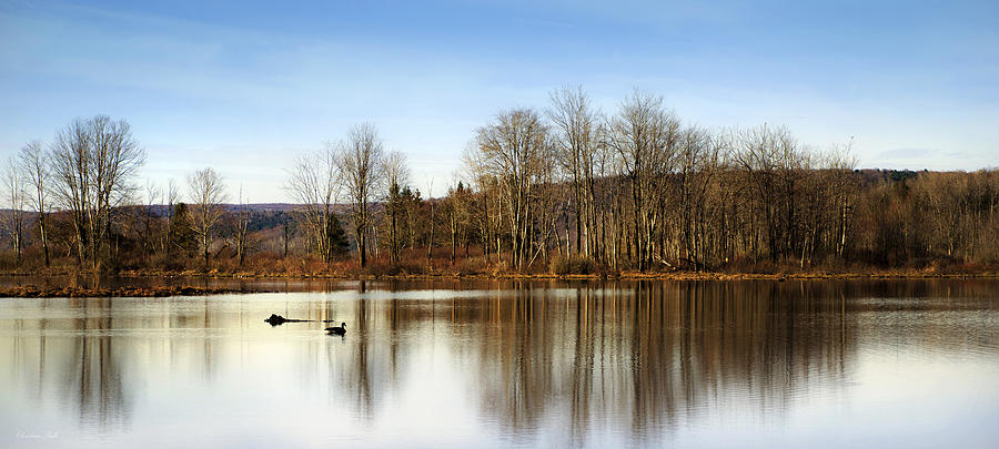Reflection Photograph - Reflections On Golden Pond by Christina Rollo