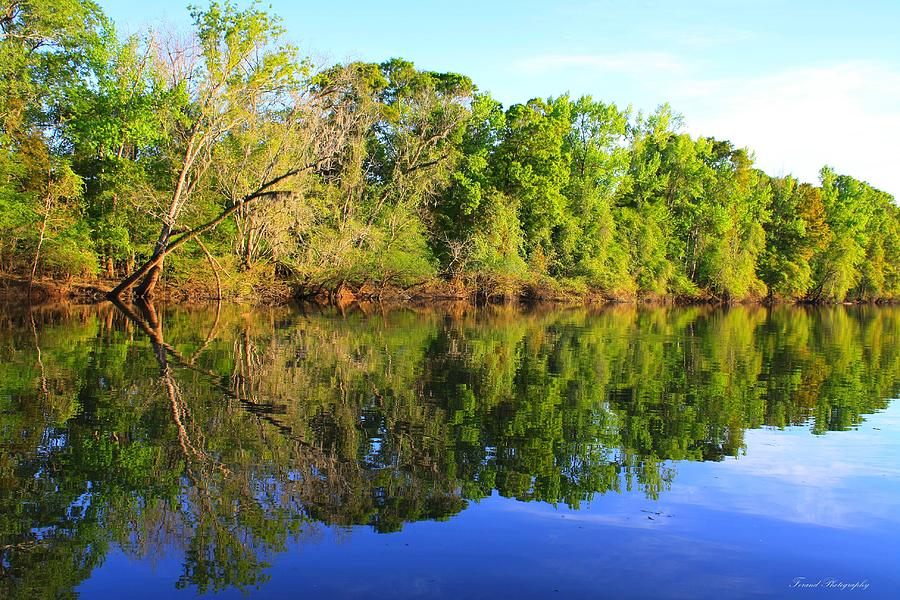 River Photograph - Reflections On The River by Debra Forand
