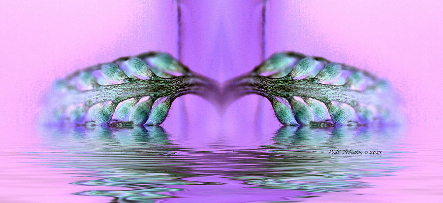 Reflection Photograph - Reflective Consciousness by WB Johnston