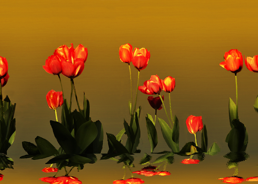 Tulips Photograph - Reflective  by Steven Michael