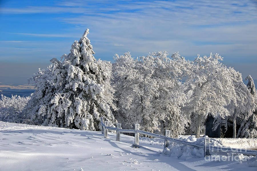 Snow Photograph - Refresh by Lois Bryan